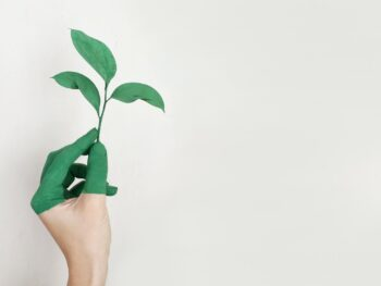 Picture of a hand turning green at the fingertips and holding a plant to represent how I'm working to meet theSustainable development goals and become more green within my business