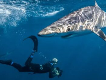 Chris from Madagascar Film and Photography underwater taking a photo of a shark