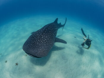 Whale Shark - conservation