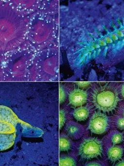 Fluoro photos of marine life by Simon J Pierce